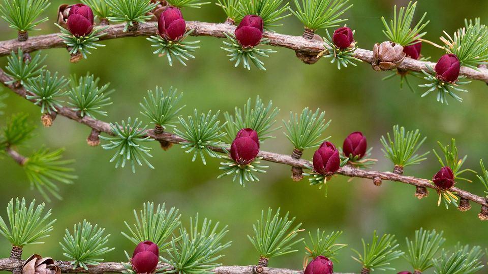 最小生成树算法